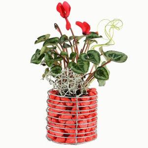 Габионы для комнатных растений купить оптом