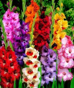 Цветочницы для гладиолусов